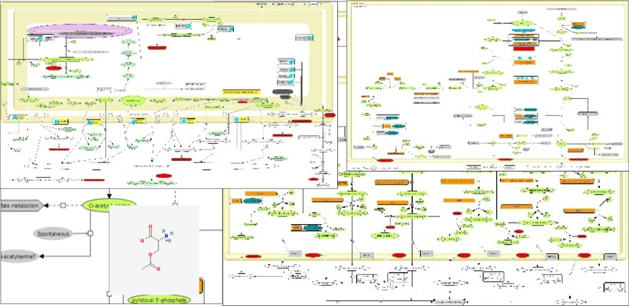 Reconstruction of metabolic networks